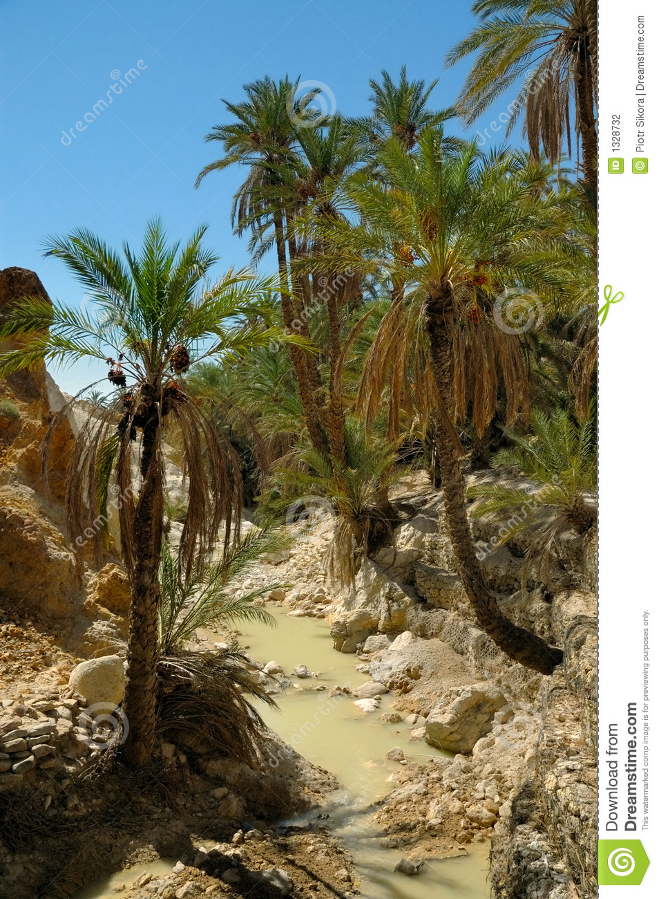 Palm Trees Over Small River In Desert Oasis Stock