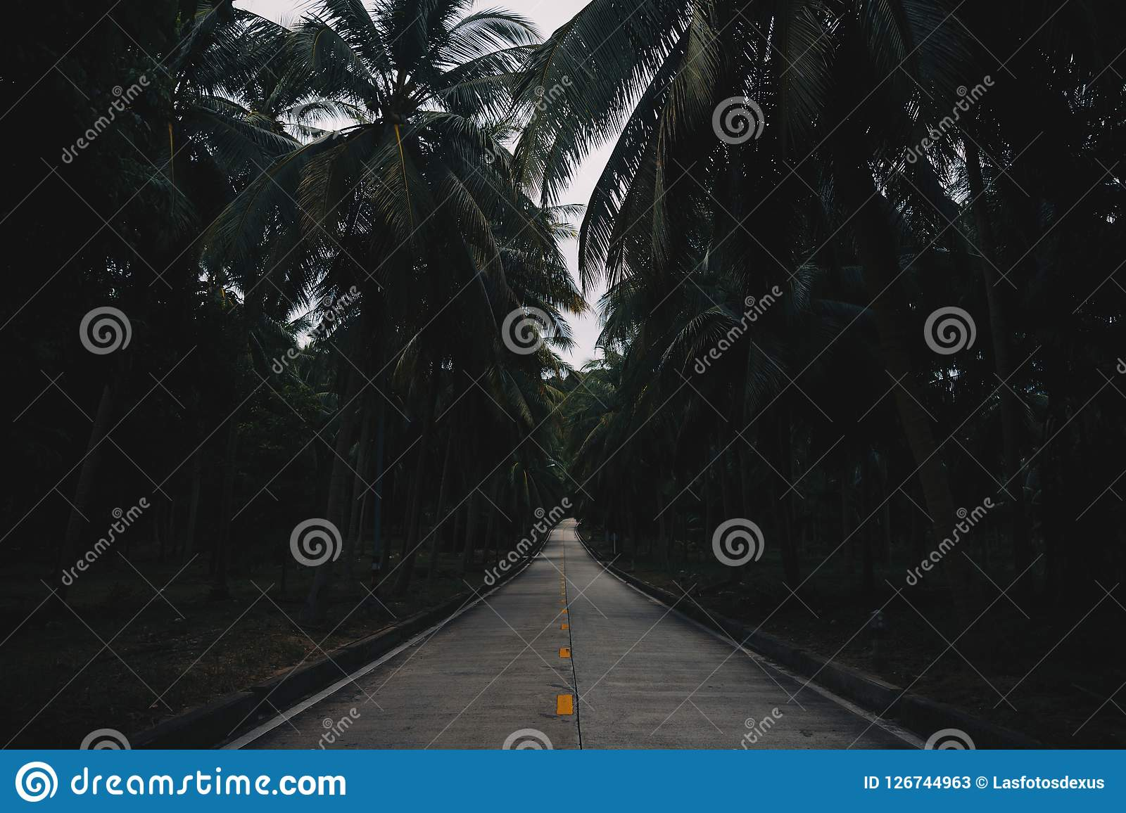 Palm Trees Road in Thailand