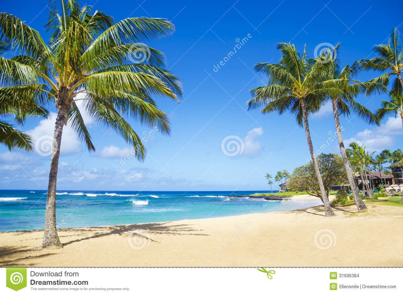 palm tree and white sand beach panoramic view stock photo image of