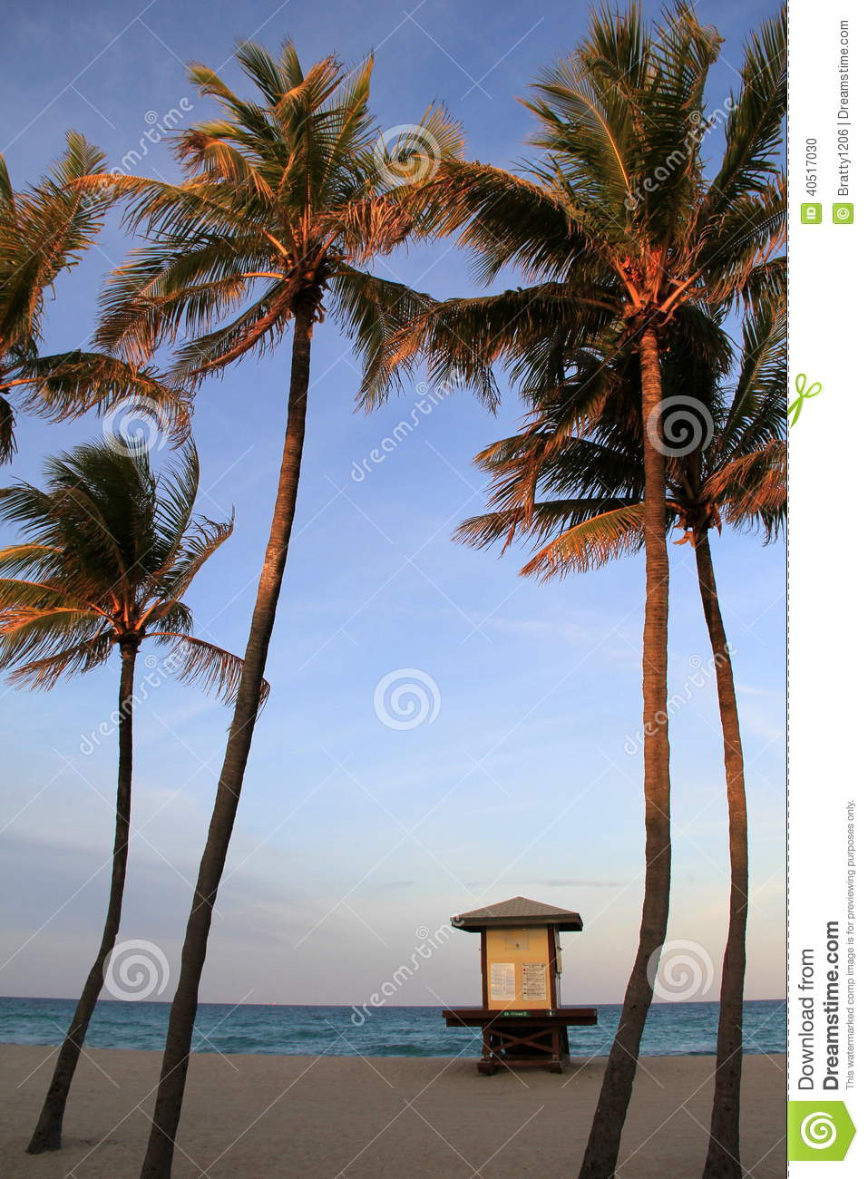 palm trees and signs showing beach conditions miami florida 2914 stock photo image 40517030. Black Bedroom Furniture Sets. Home Design Ideas