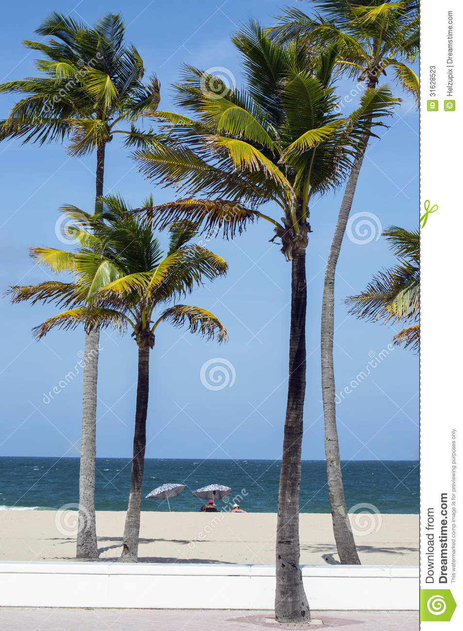 Palm Trees And Sunbathers On The Beach Stock Image