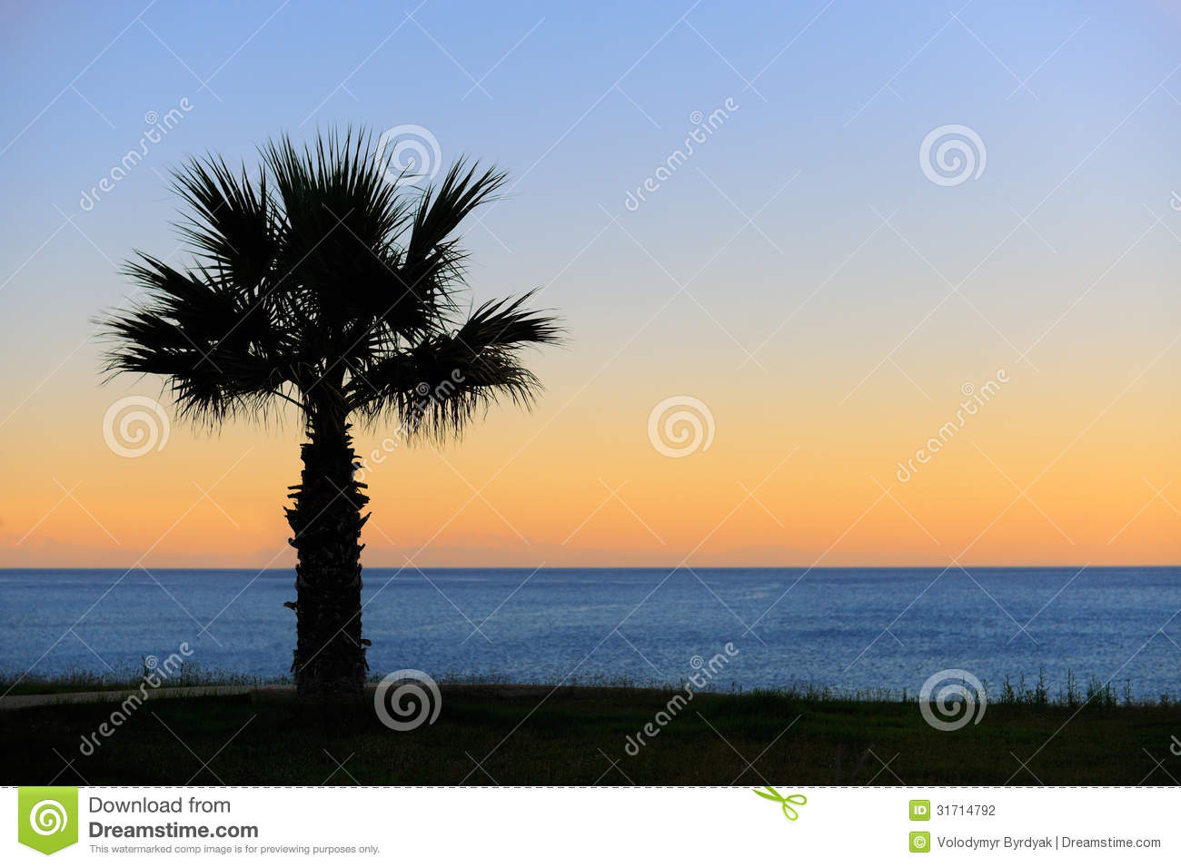 palm trees sunset stock photography image