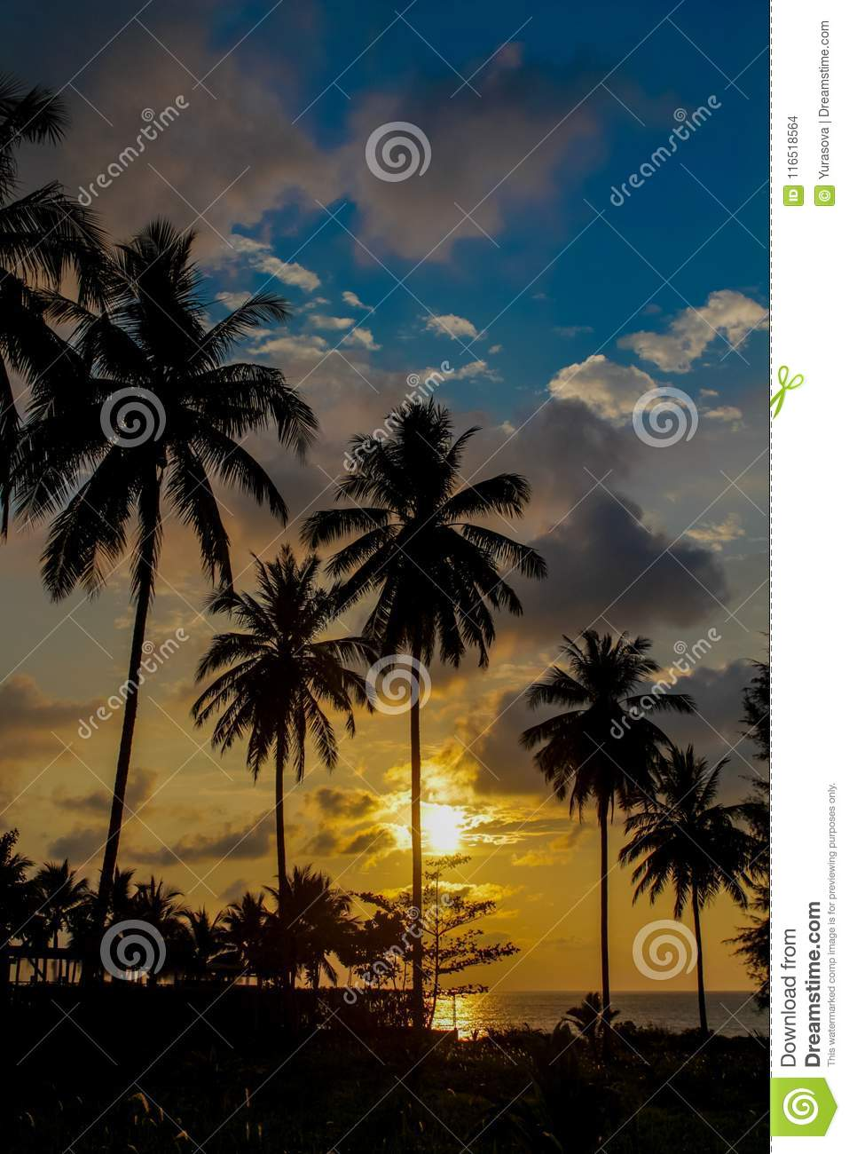 Palm Trees Sunset Silhouettes On The Beach Stock Photo