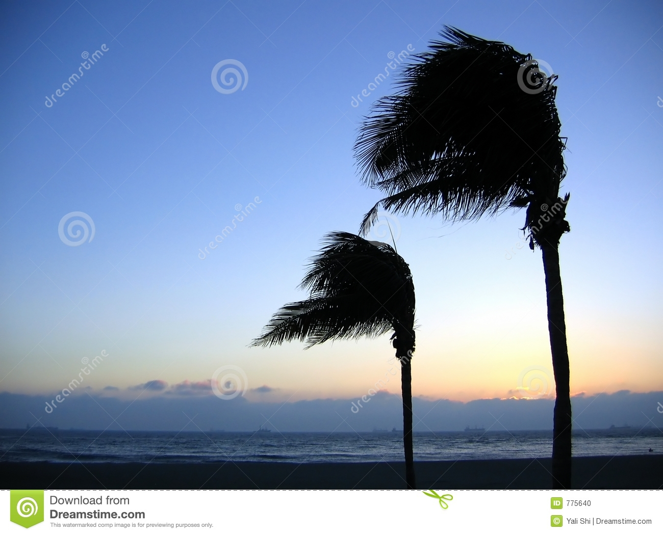 palm trees swaying in the wind stock photo image 775640 quiet clip art for work quiet clip art image