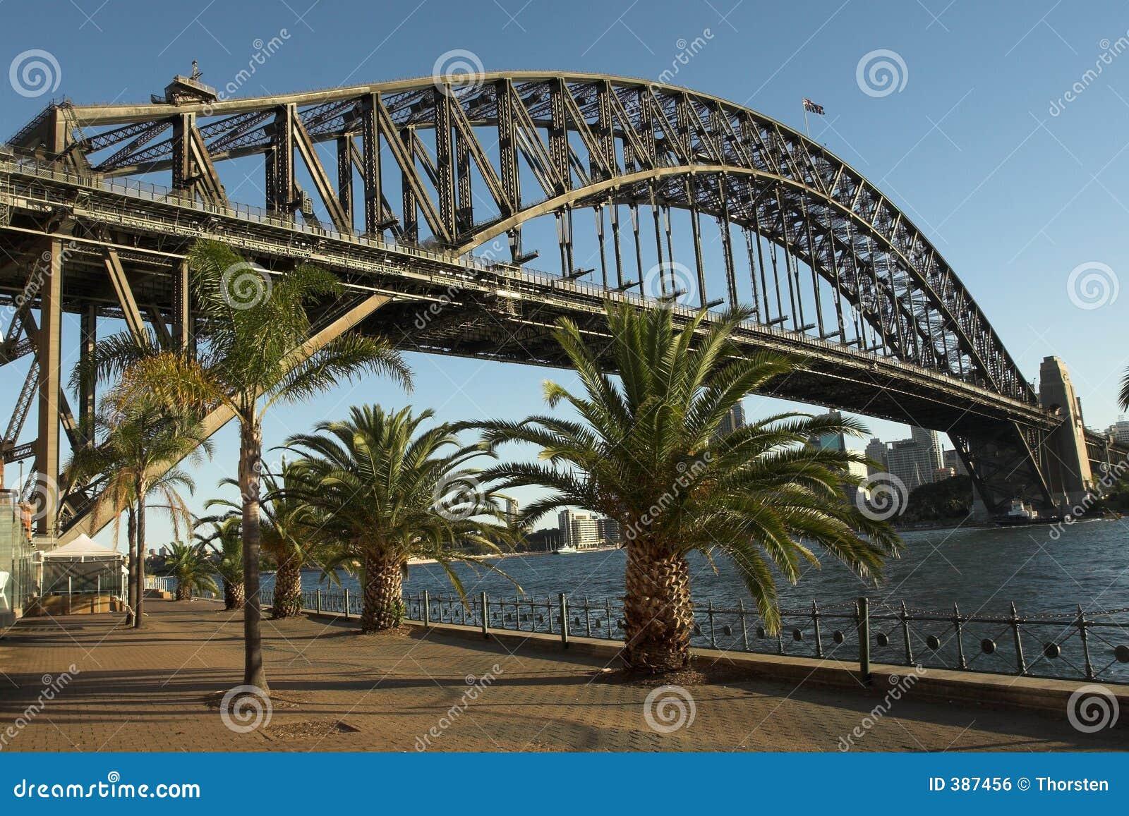 Date palms in Sydney