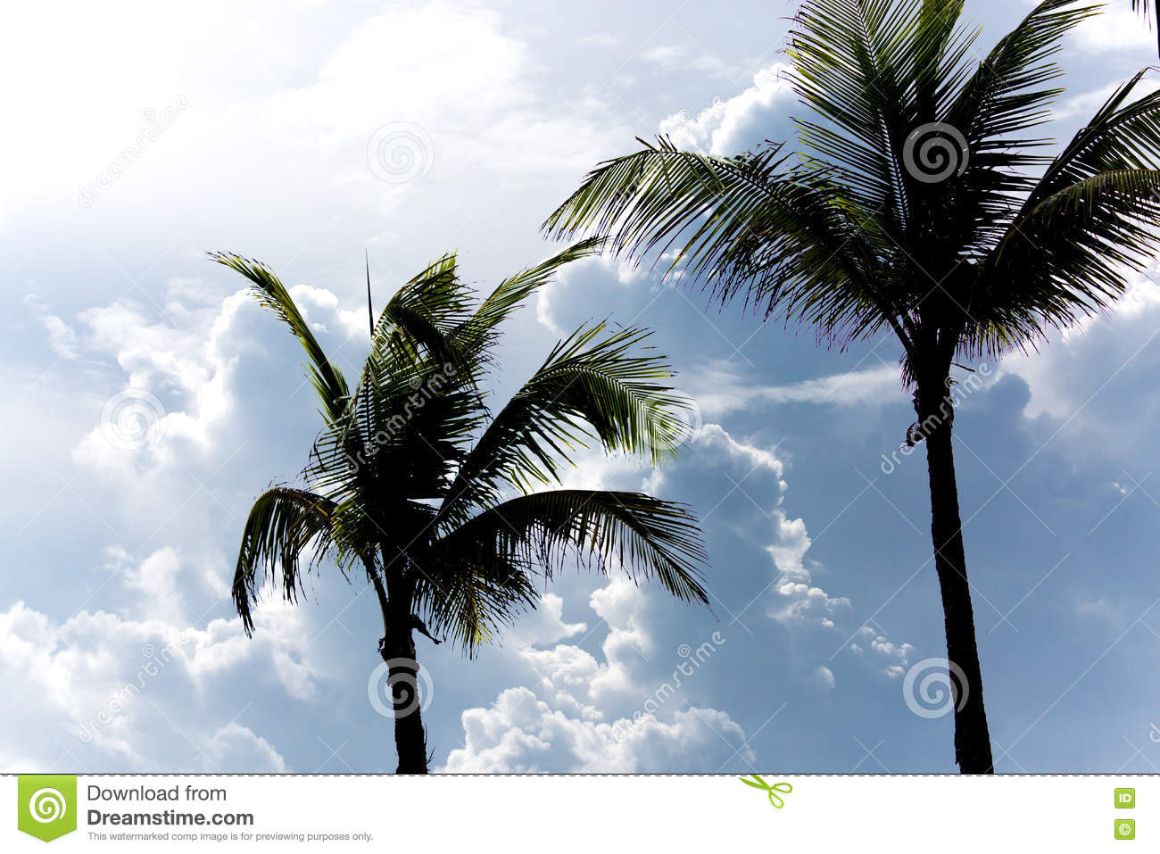 Palm Trees and Thick Clouds