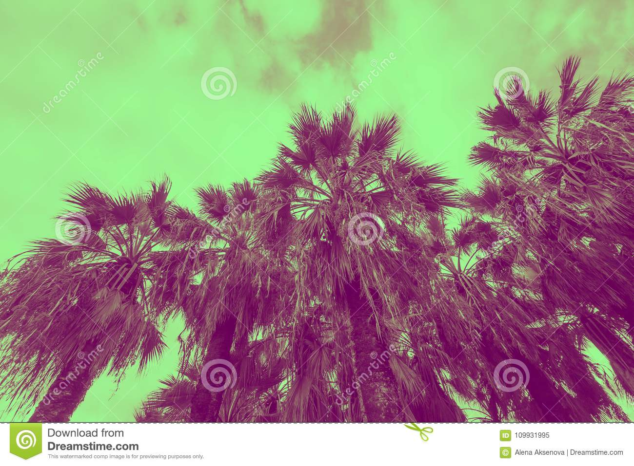 Palm Trees Toned In Green And Violet Colors Stock Image - Image of ...