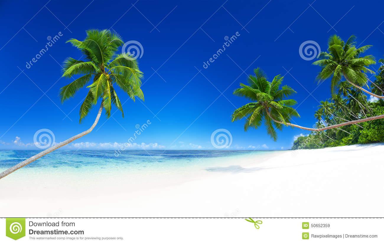 Palm Trees Tropical Beach Summer Vacation Concept