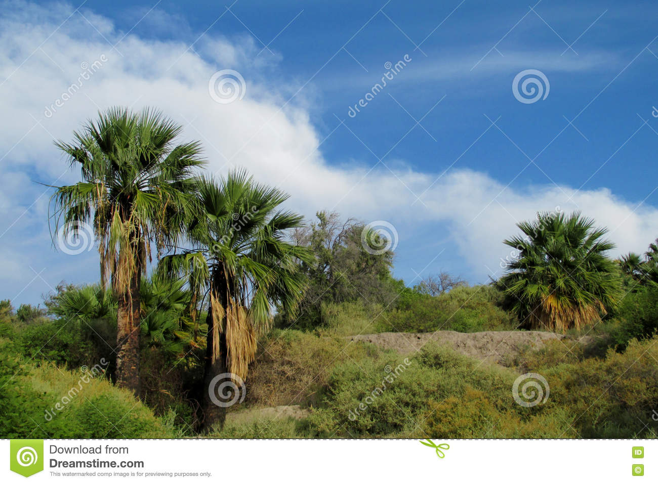 Palm Trees In Tropical Park Royalty Free Stock Photo