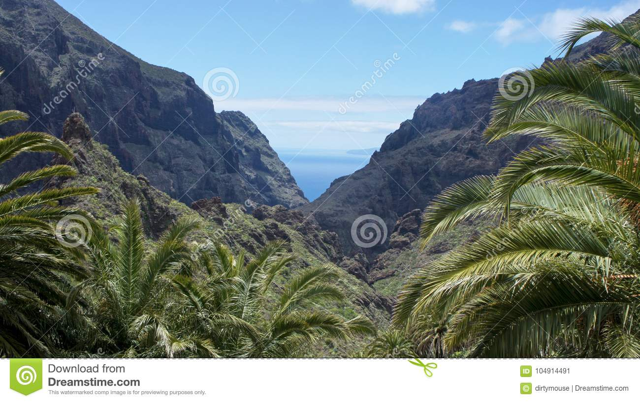 Download Palm Trees In The Valley Of Masca Stock Image - Image of geological, mountains: 104914491