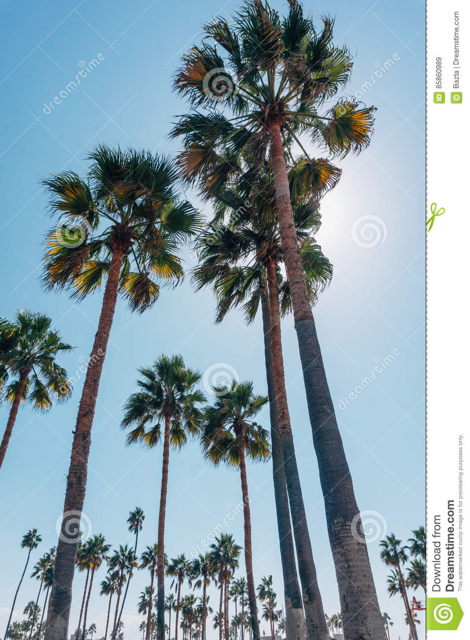 Palm Trees On A Venice Beach In California