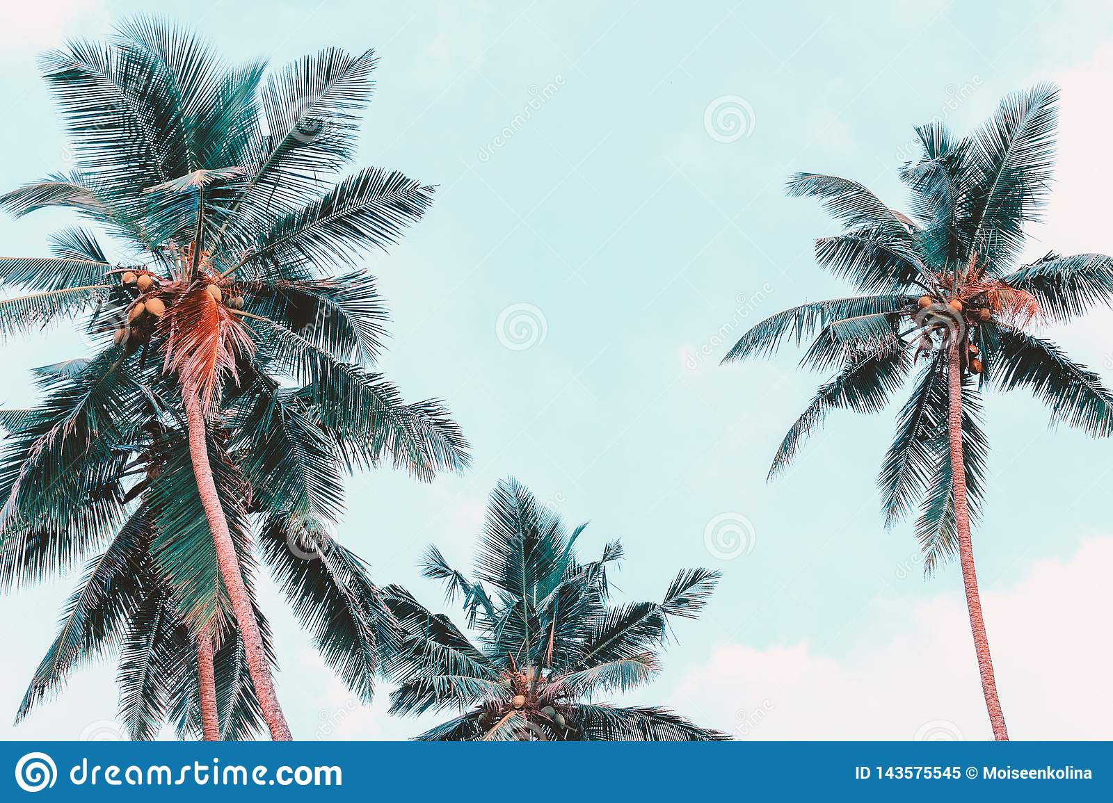 Palm Trees View From Below. Tropical Photo Background ...