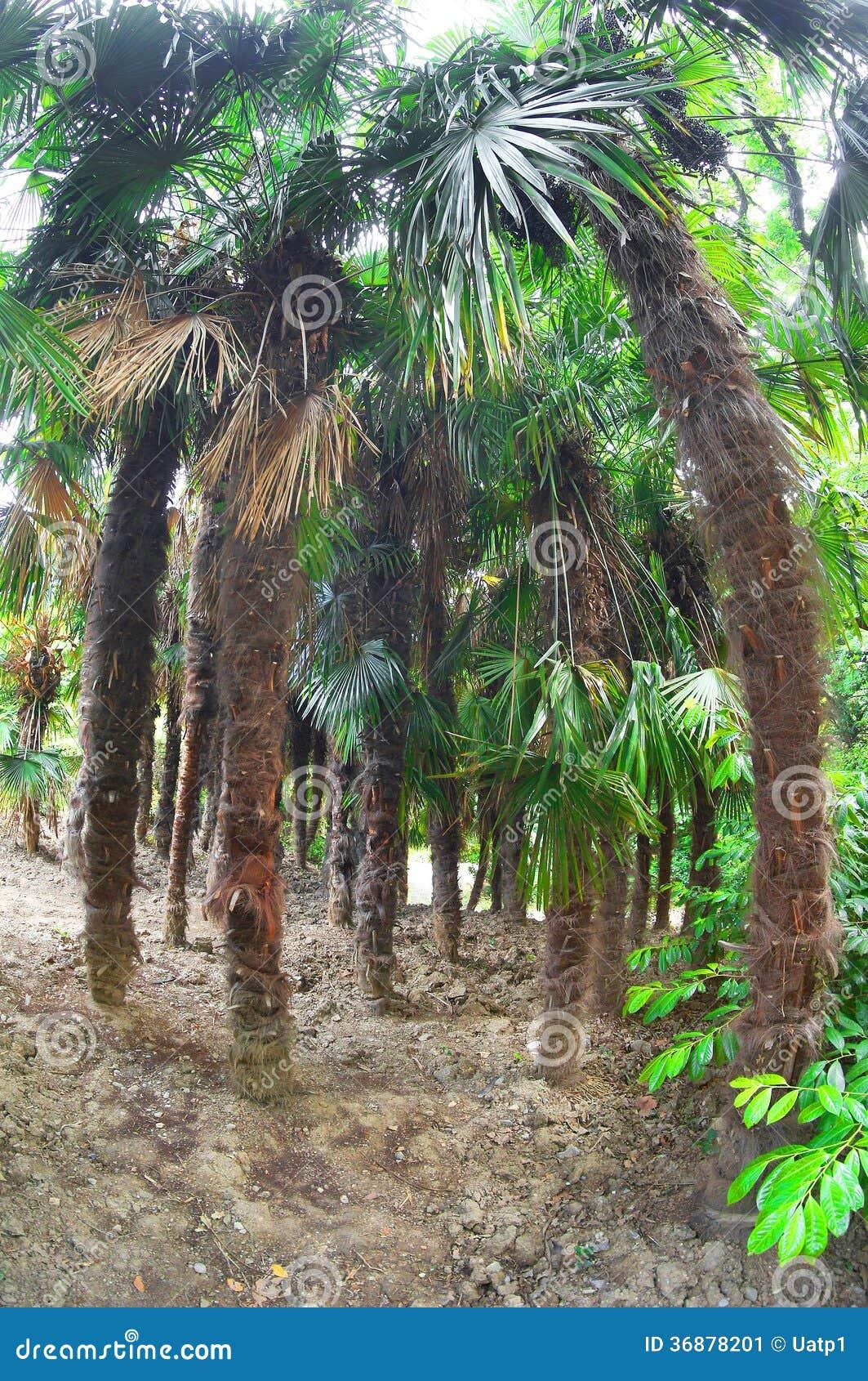 Download Palma immagine stock. Immagine di fine, strutturato, tropicale - 36878201
