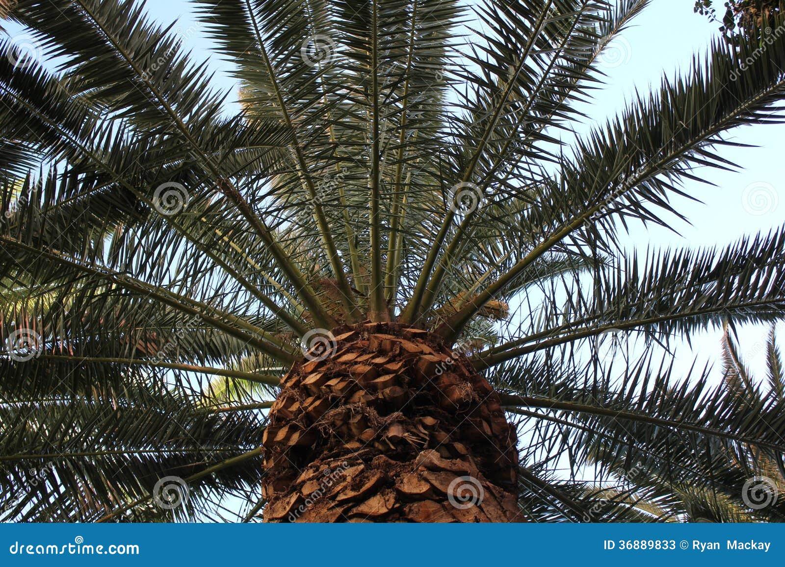 Download Palma immagine stock. Immagine di foglio, tropicale, caldo - 36889833