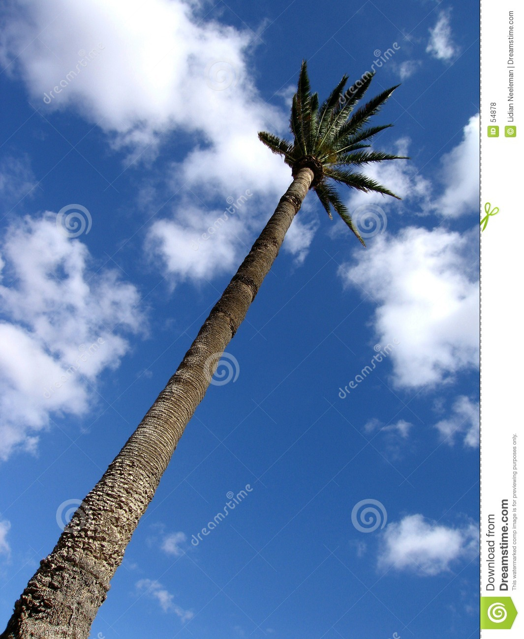 Download Palma fotografia stock. Immagine di tropicale, isolato, nave - 54878