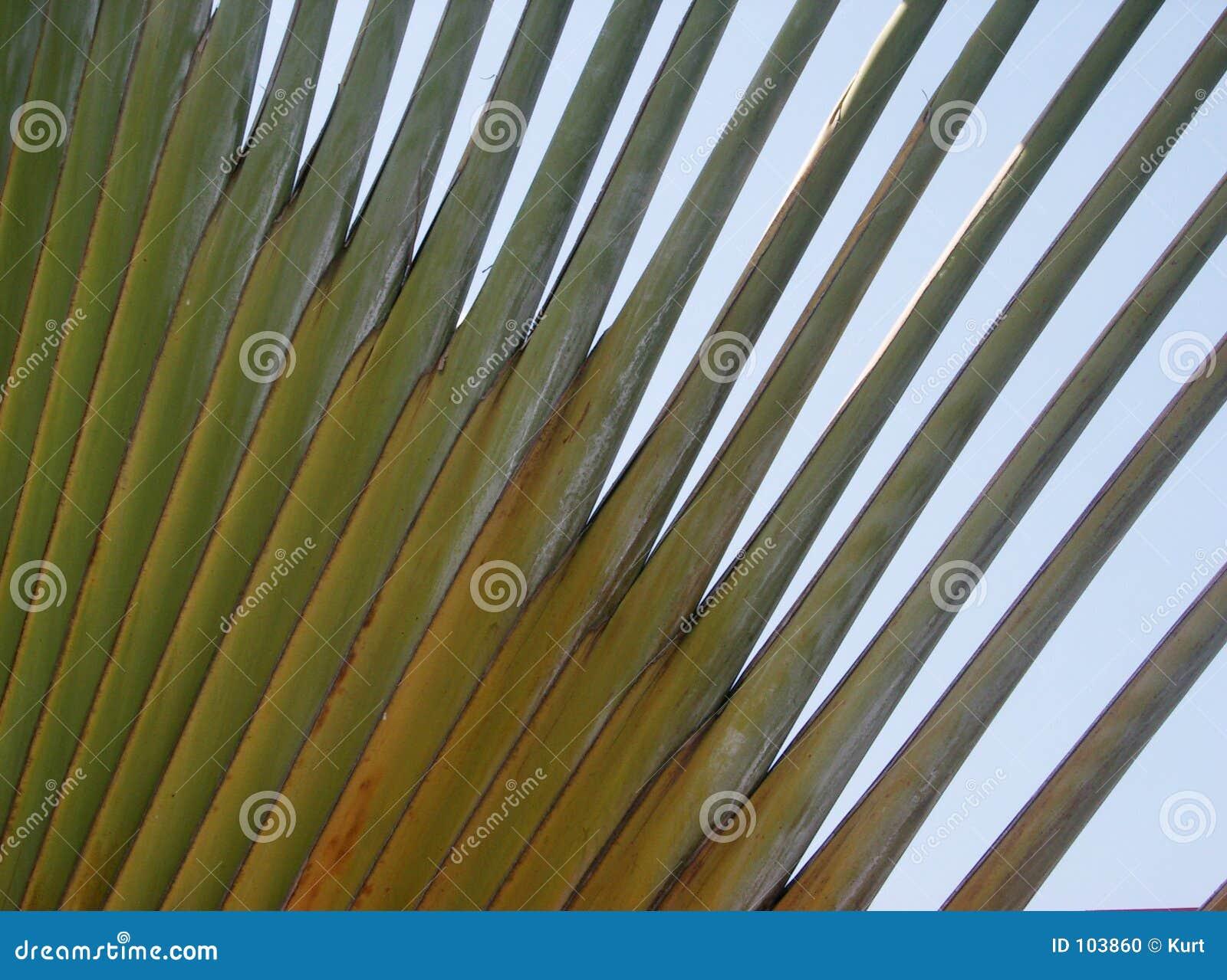 Palma abstrata