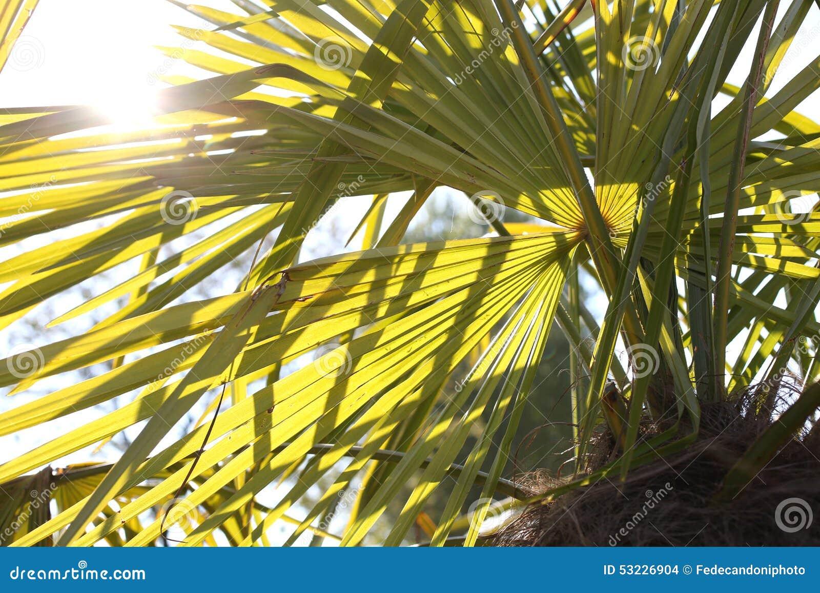 Palma con las hojas largas y el Sun alto