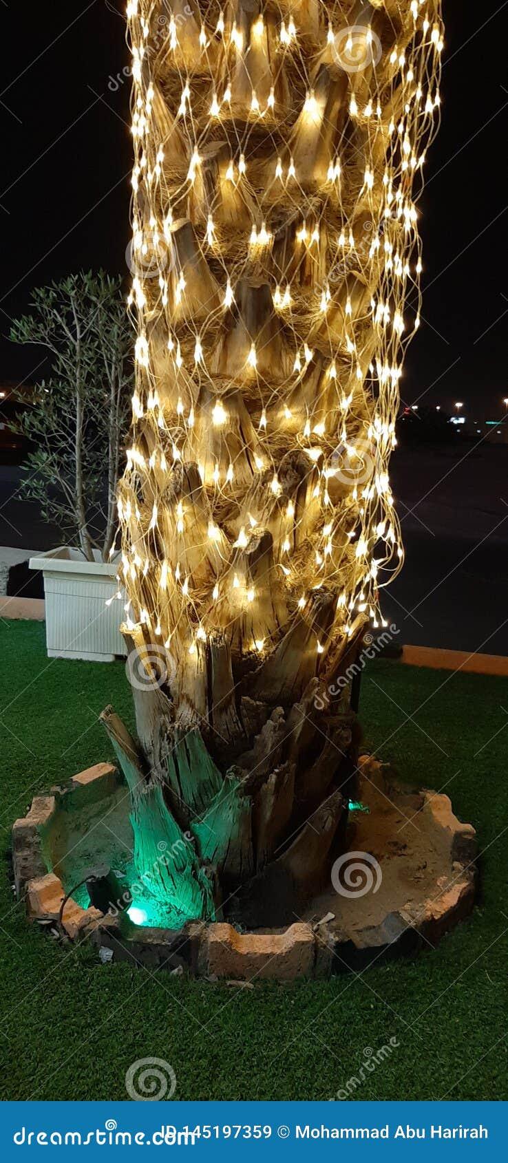 Palma criativa com luz no Natal