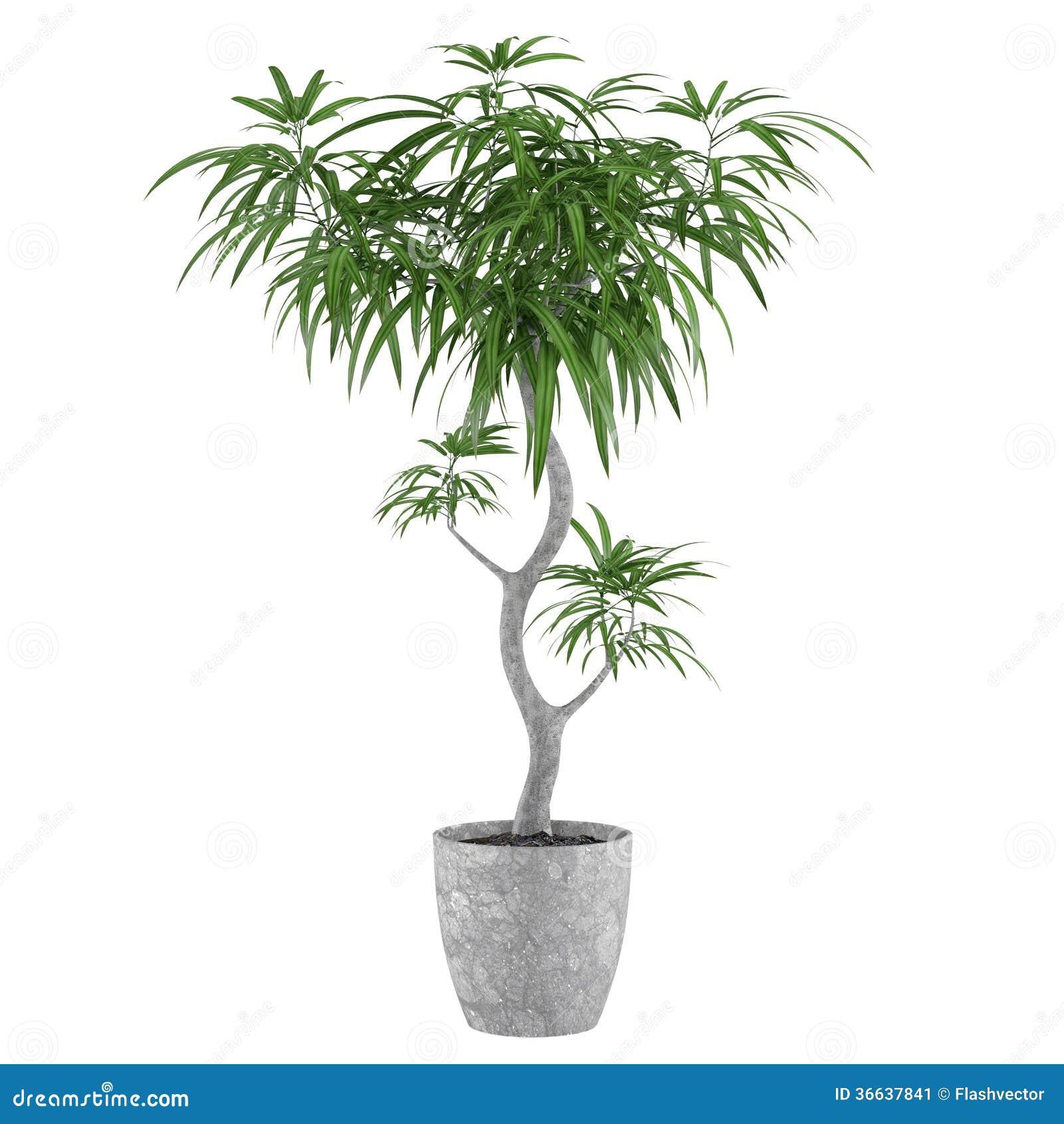 Palma decorativa della pianta da vaso immagine stock for Palma pianta