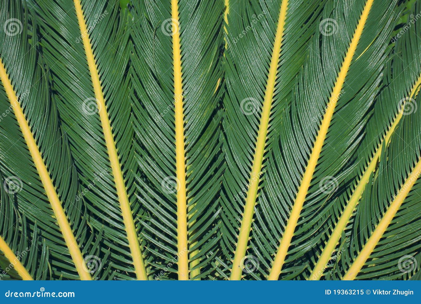 Palma deixa a textura