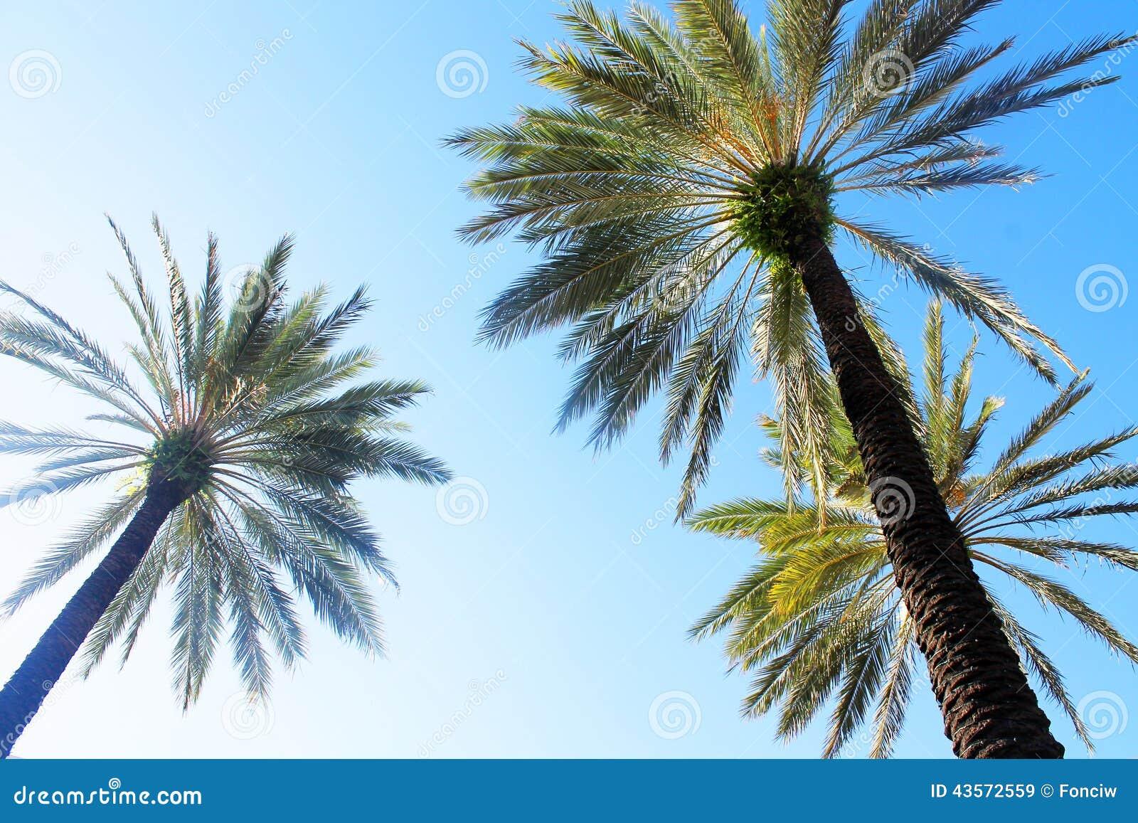 Palma Florida