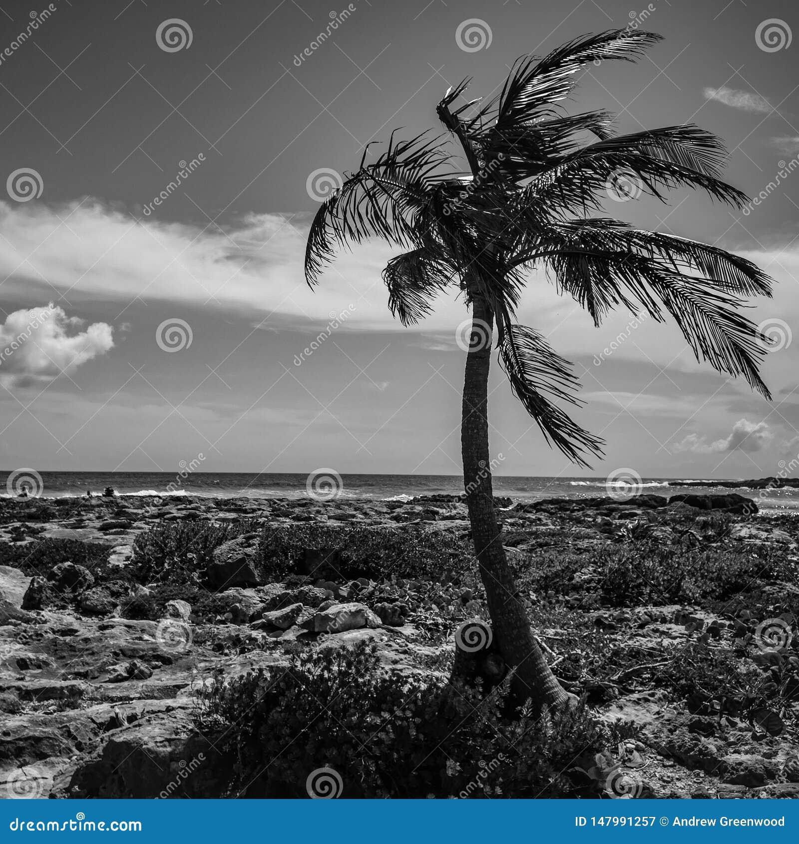 Palma monocromática no paraíso