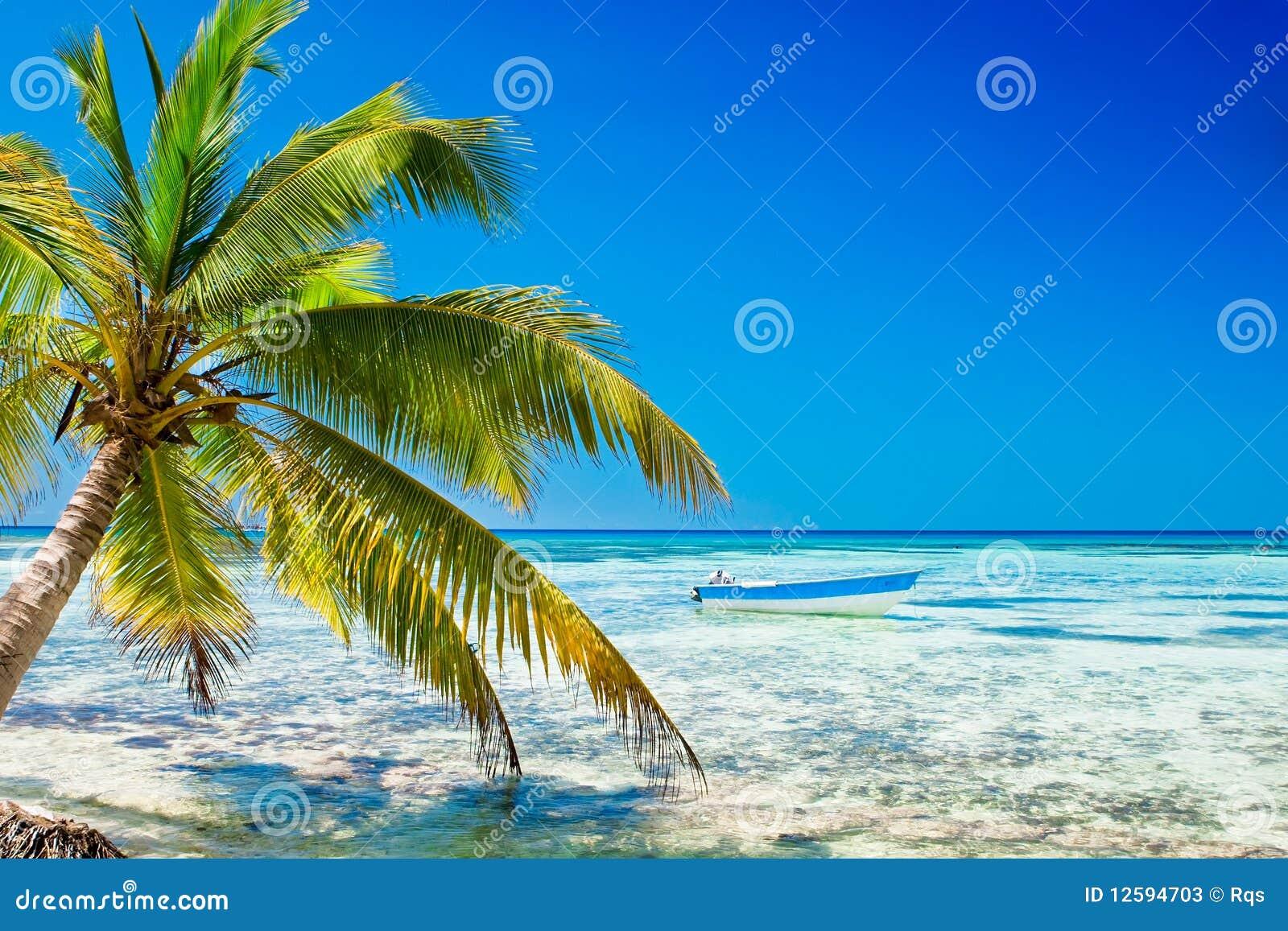 Palma na praia branca da areia perto do oceano ciano