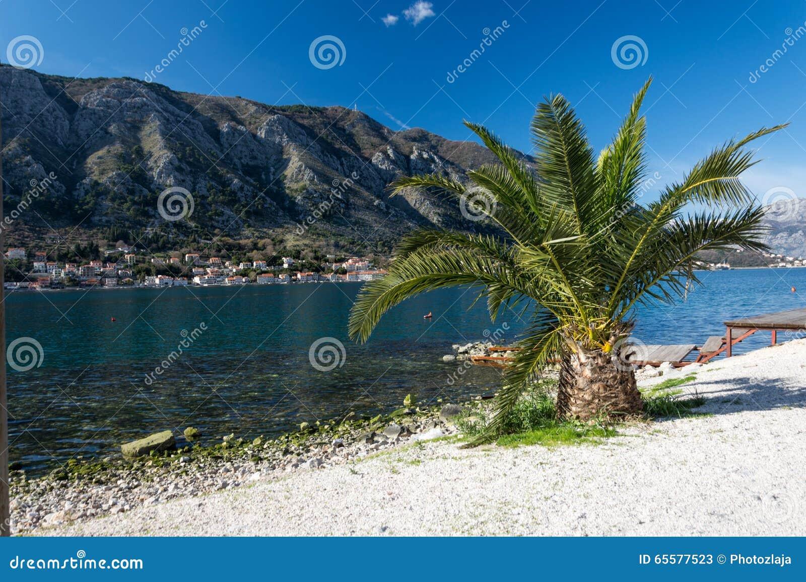 Palma na praia do mar de adriático