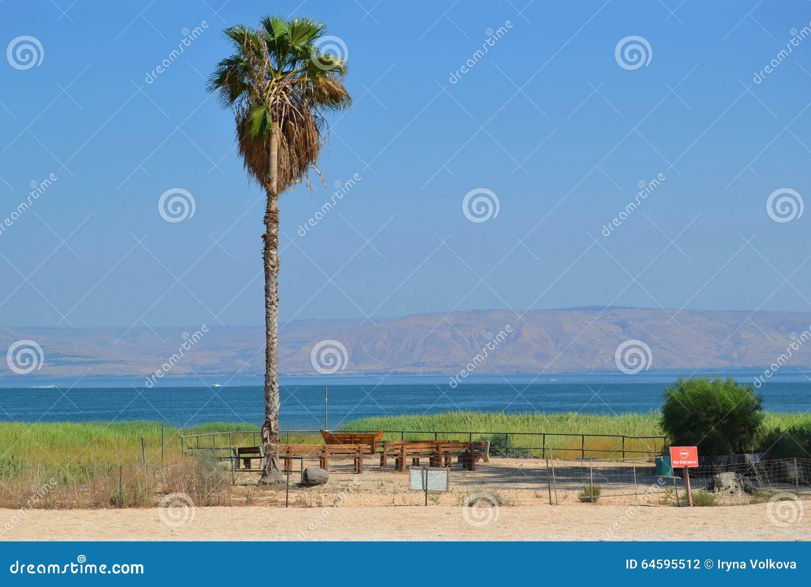 Palma sulla riva