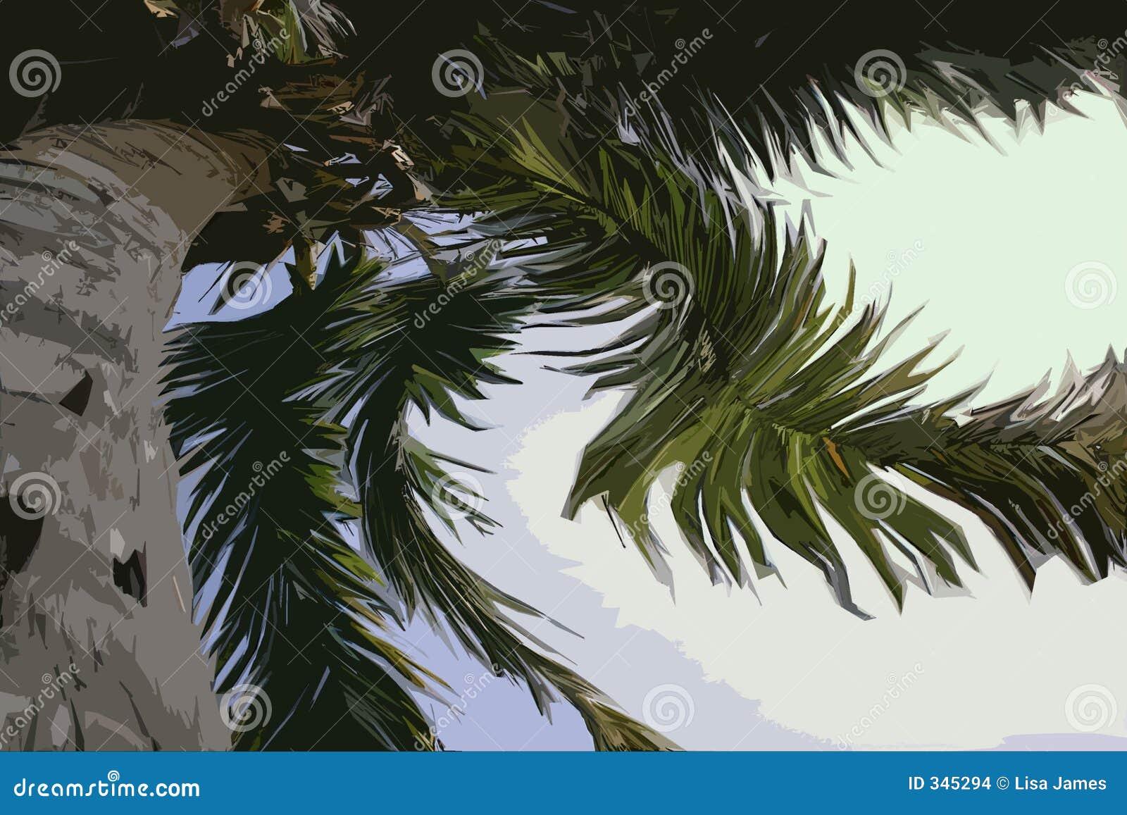 Palma torcida