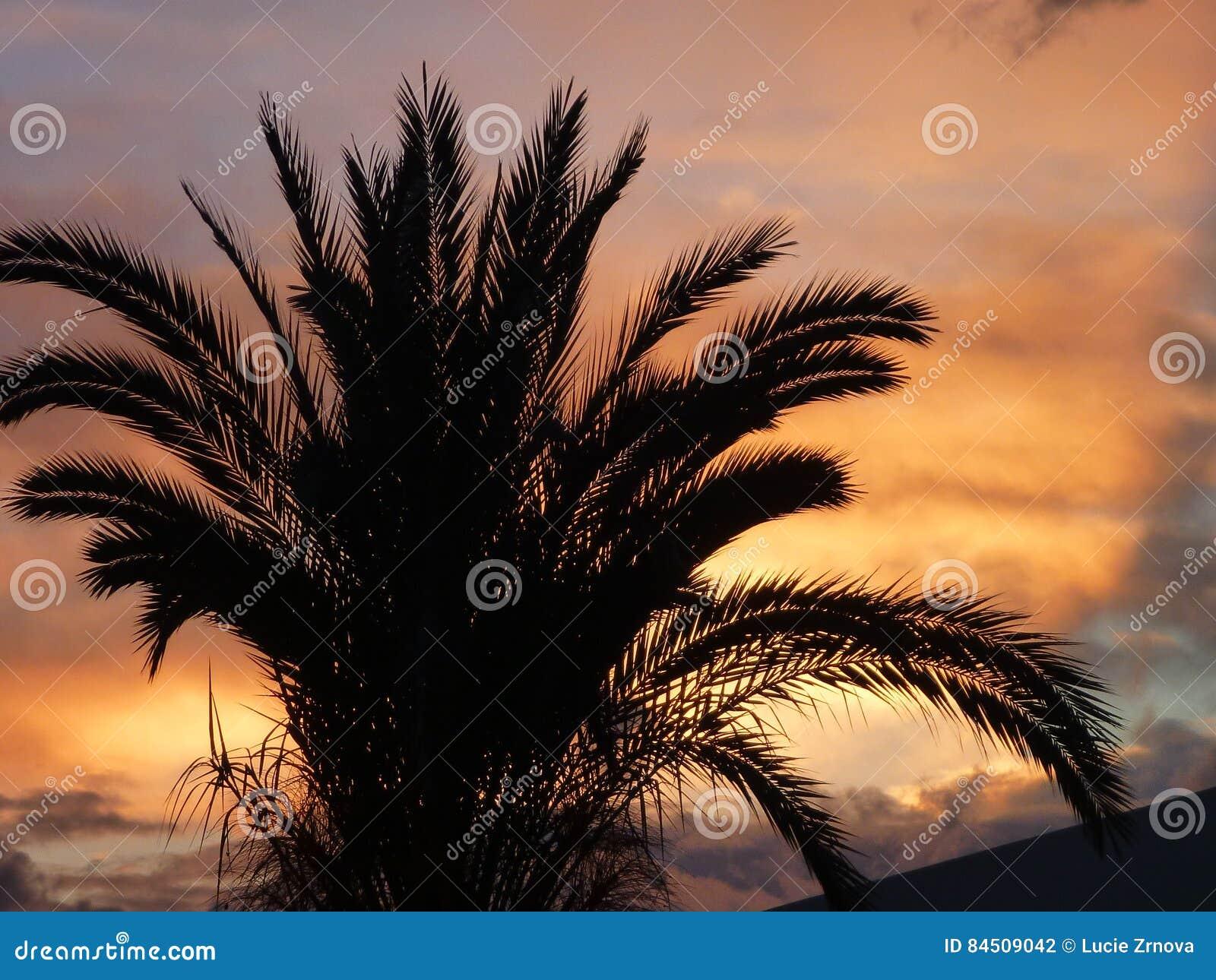 Palma in un bello tramonto romantico