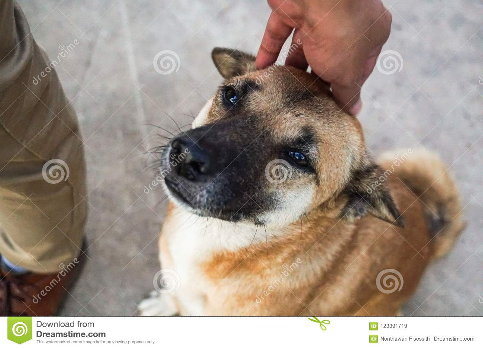 Palmadita masculina de la mano la cabeza de perro perdido