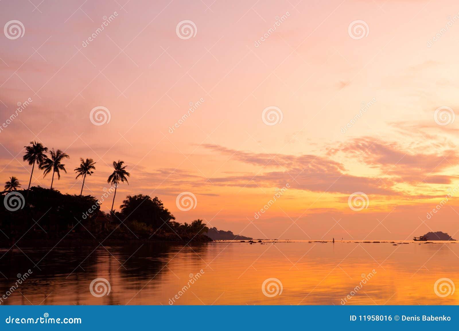 Palmas de coco en la playa de la arena en trópico en puesta del sol