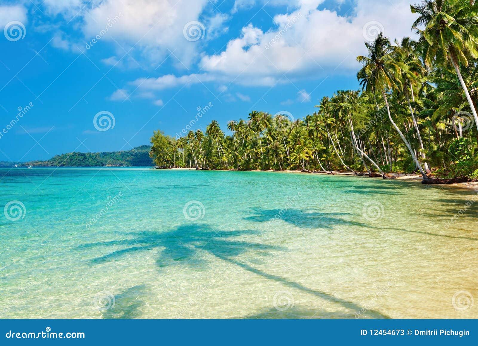 Palmas de coco na praia fotos de stock imagem 12454673 for Imagenes de coco