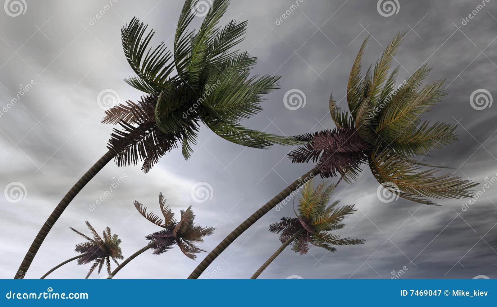 Palmas en el huracán