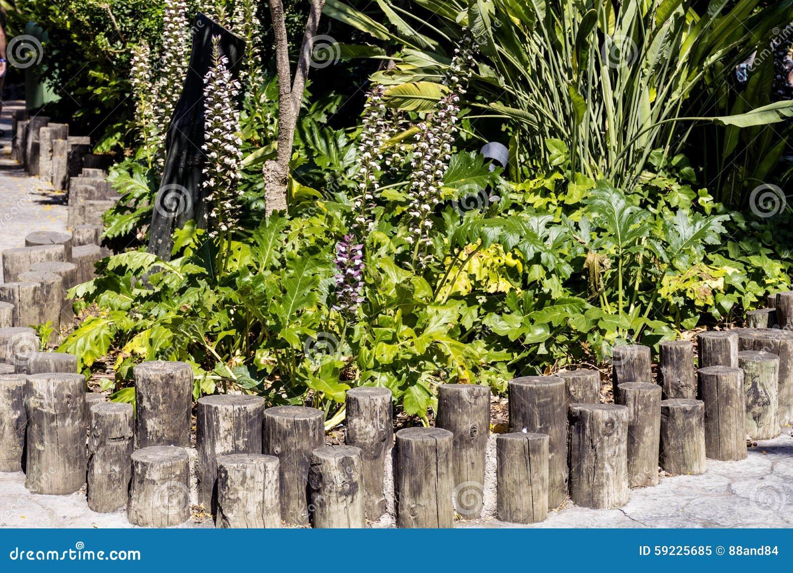 Download Palmas Verdes Al Aire Libre Imagen de archivo - Imagen de españa, exótico: 59225685