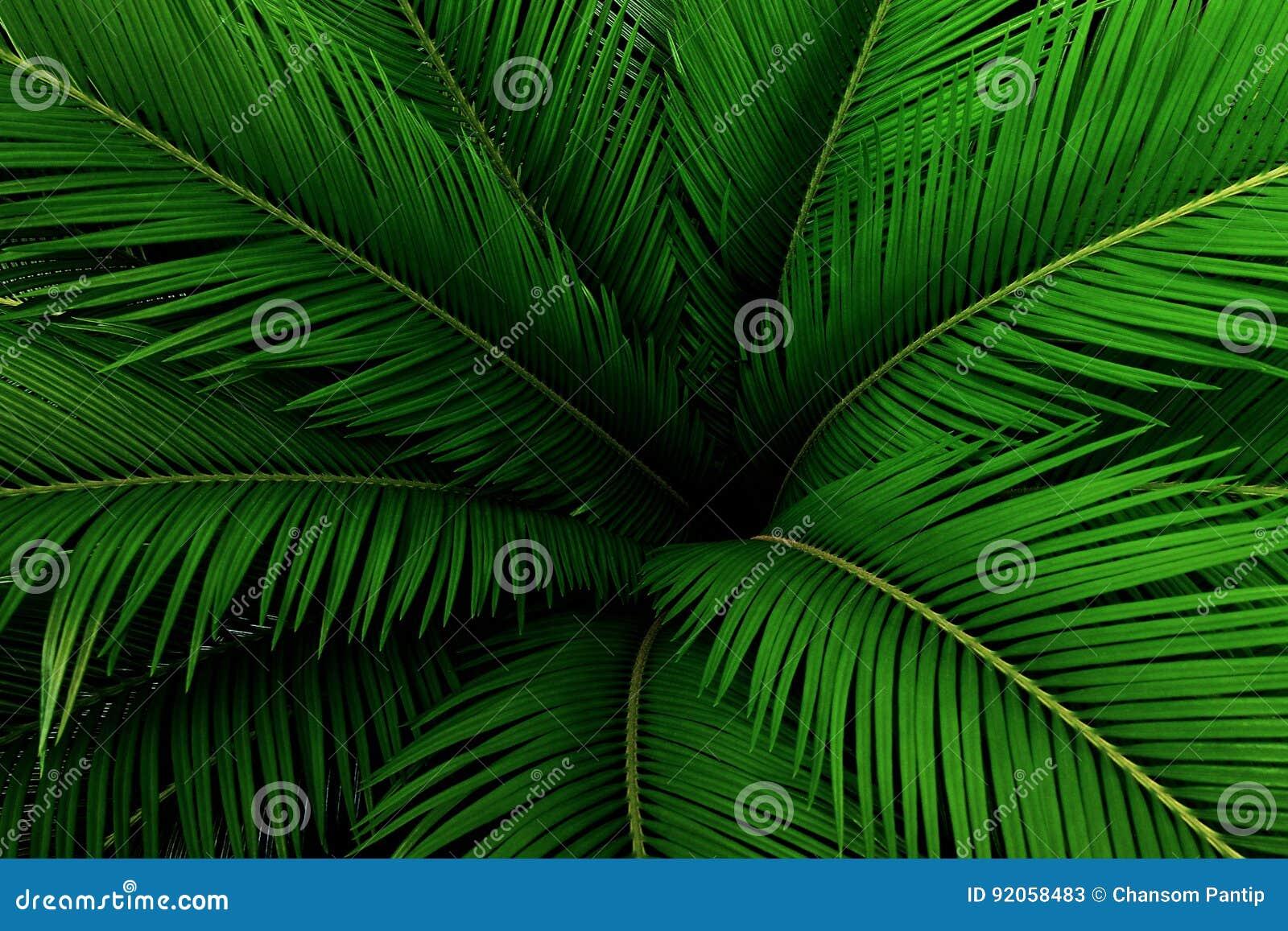 Palmblätter grünes Muster, abstrakter tropischer Hintergrund