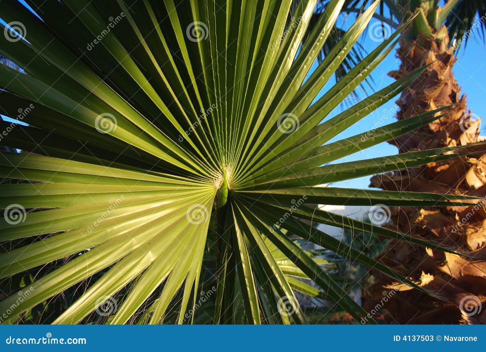 Palmblad en palm