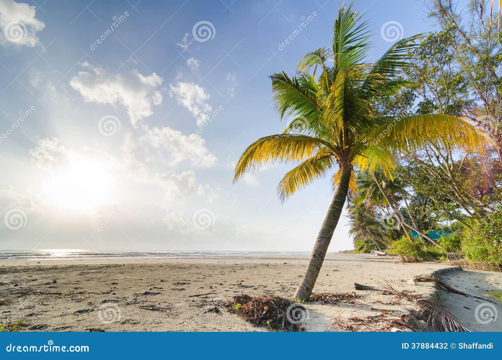 Palmblad en palmen