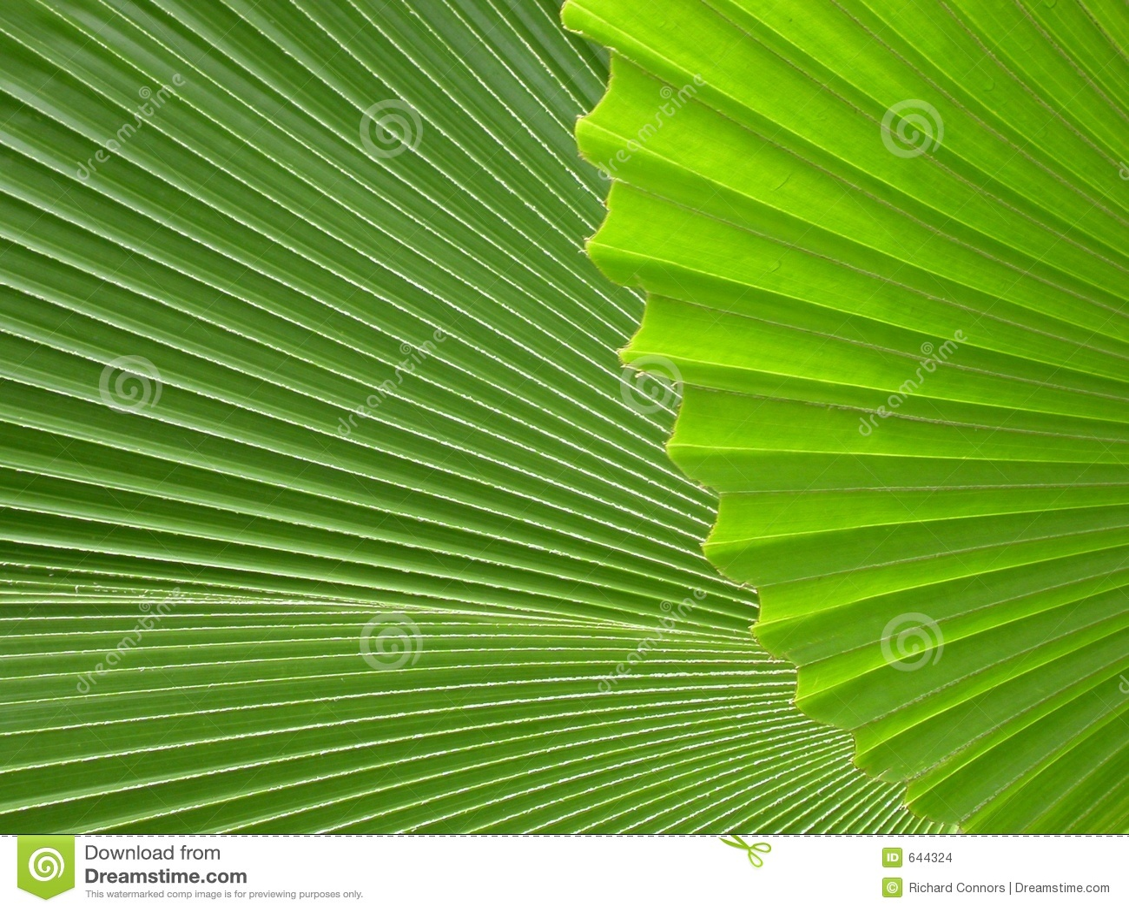Palmbladen
