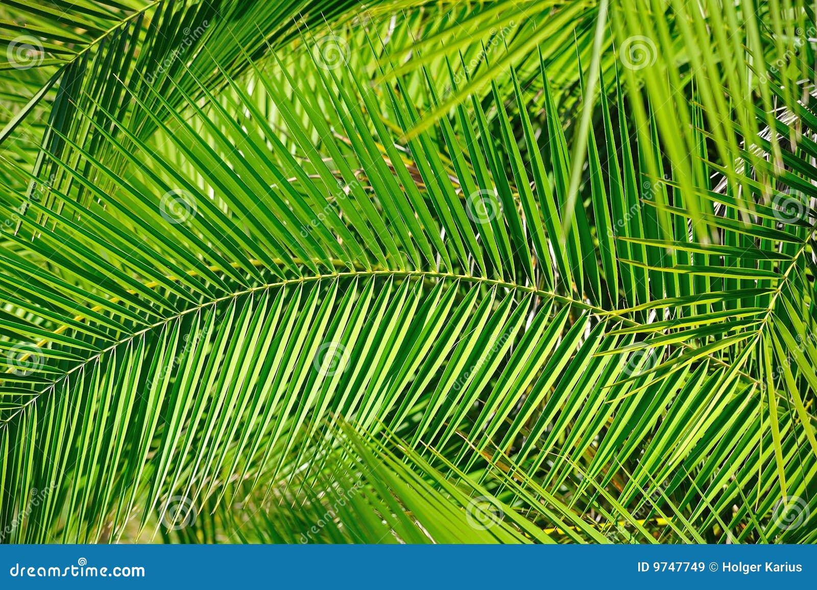 Palmbladen (Achtergrond)