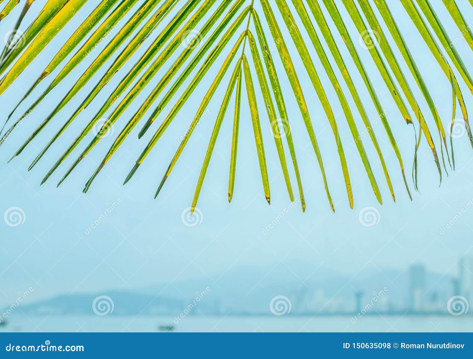 Palmbladen tegen de achtergrond van de stad