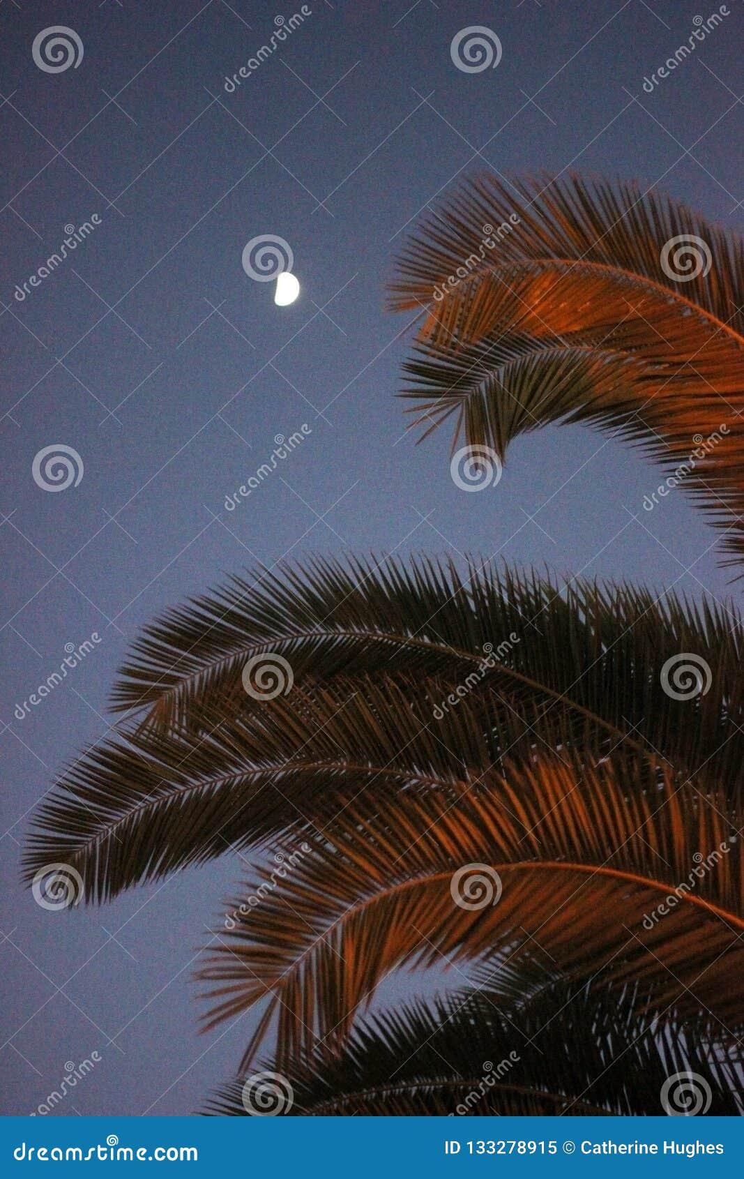 Palmbladeren in de laatste notulen van zonsondergang