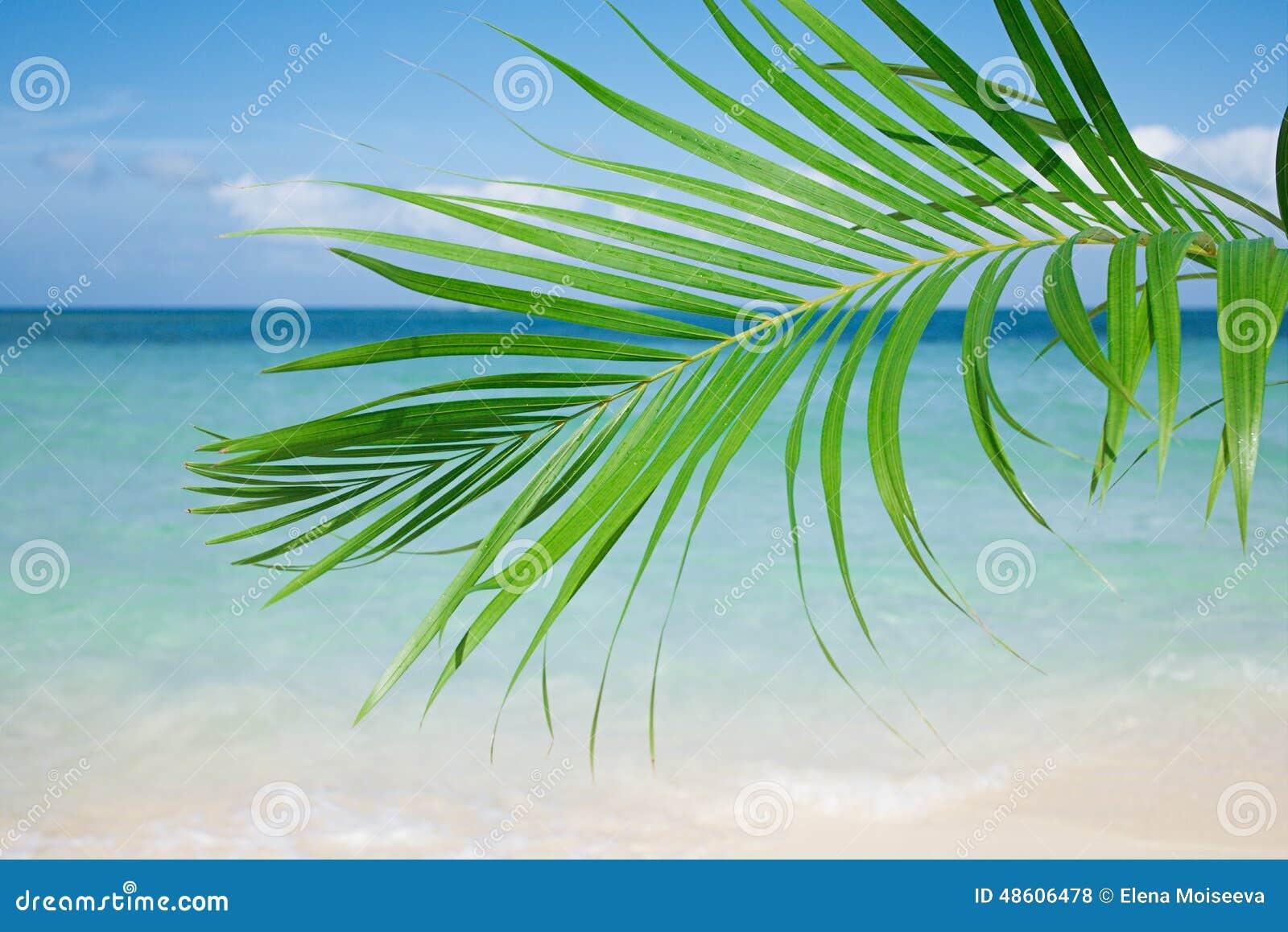 Palmbladet, det blåa havet och tropisk vit sand sätter på land under solen