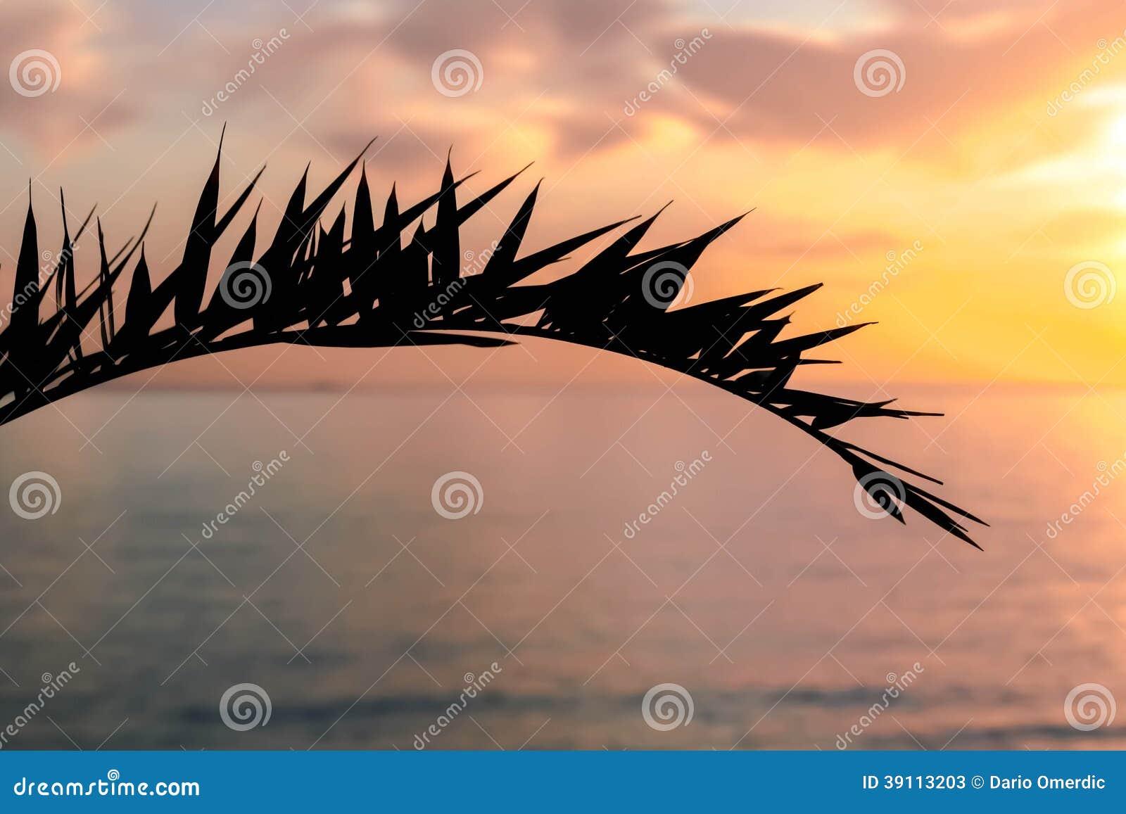 Palmbladsilhouet