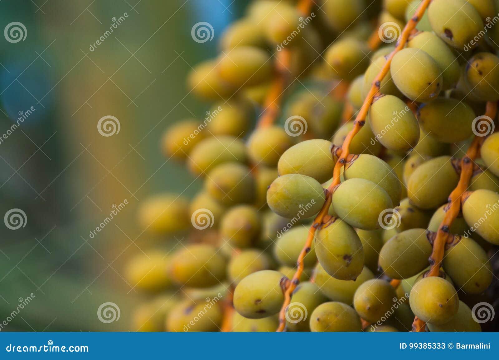 Palmdata die op de palm groeien