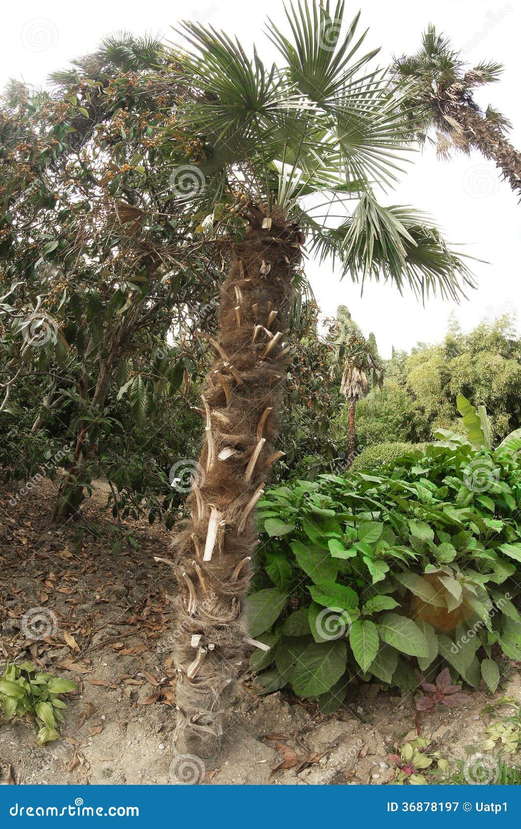 Download Palme immagine stock. Immagine di verde, tropicale, clima - 36878197