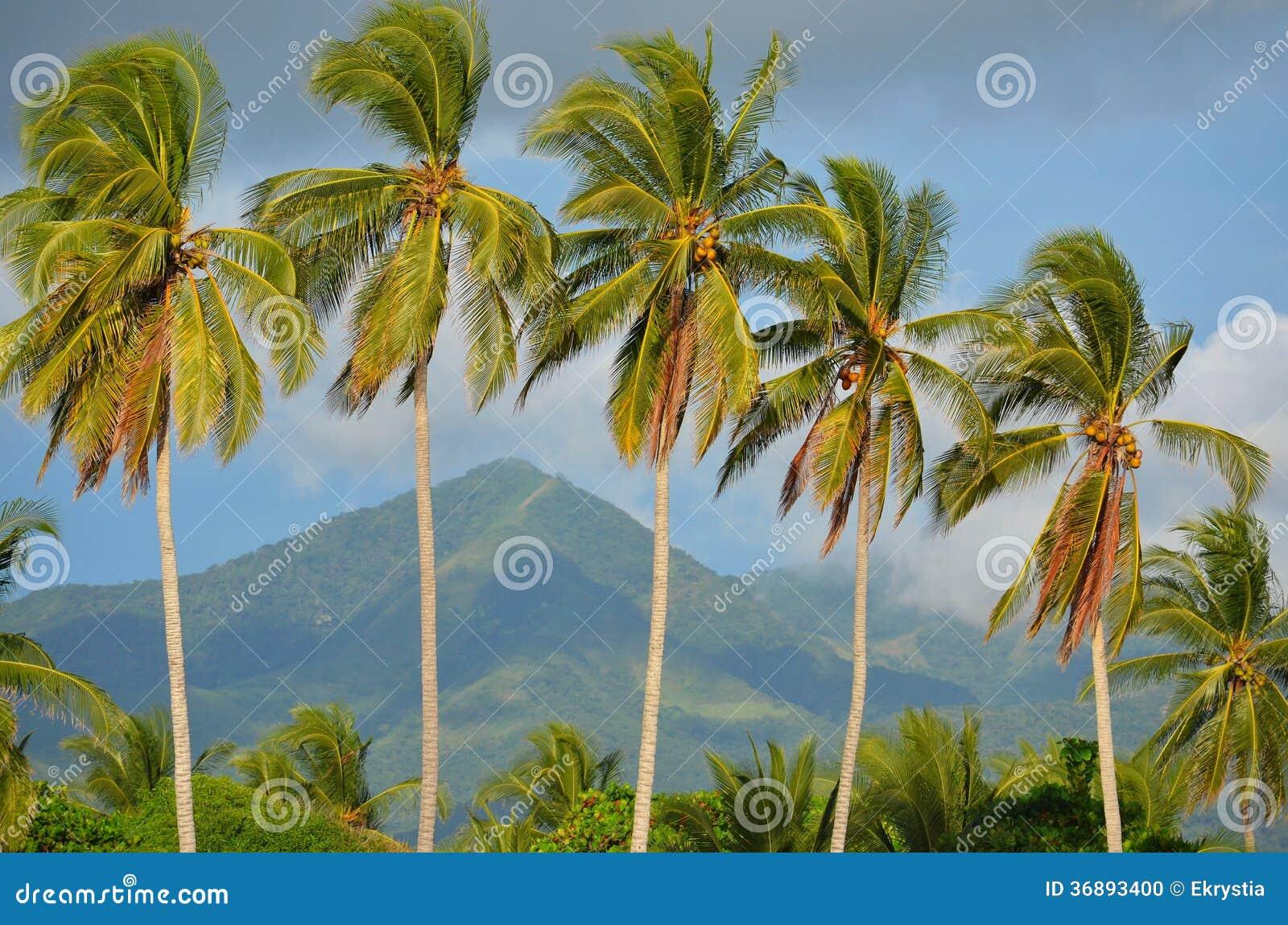 Download Palme Al EL Espino Di Playa Fotografia Stock - Immagine di coco, america: 36893400