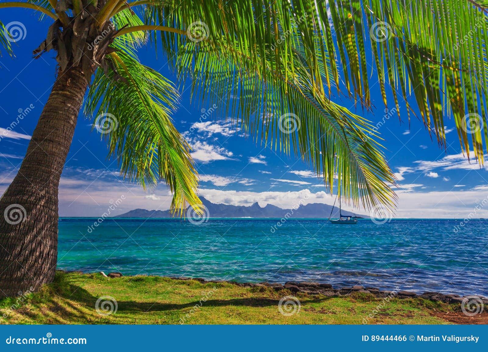 Palme auf dem Strand auf Tahiti mit der Ansicht von Moorea-Insel