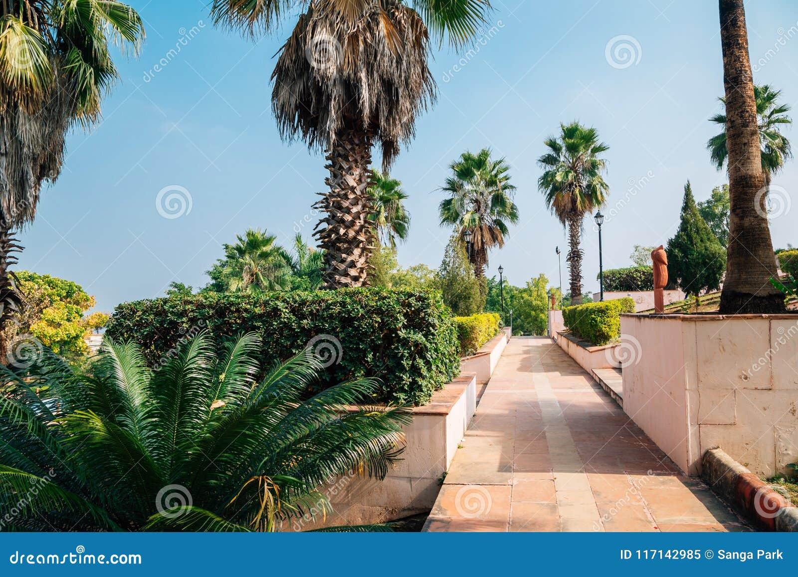 Palme bei Rajiv Gandhi Park in Udaipur, Indien